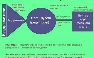 Возражение — психология