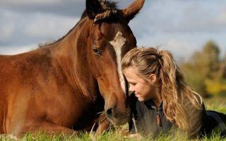 Чувство лошади — психология
