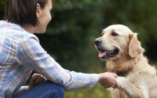 Человек и здоровое животное — психология