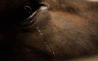 Плач в животном мире — психология