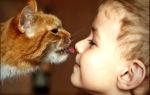 Рыжая кошка, или кто в семье главный — психология