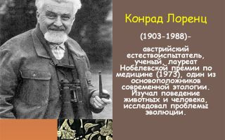 Конрад лоренц — психология