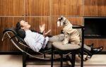 Борьба со скукой и творчество – случай с собаками — психология