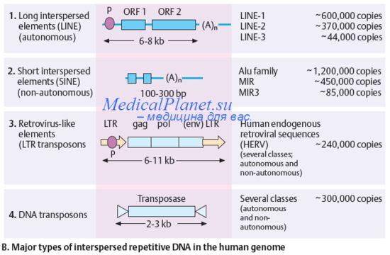 Близнецовый метод реферат по генетике 1528